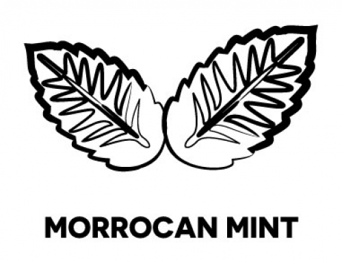 – Moroccan mint –A little green tea, gunpowder for that sharp touch and spearmint for the fresh flavour. Moroccan tea is a traditional drink throughout the year, both hot and cold with a slice of lemon. It is a real thirst-quencher!